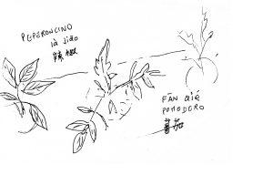 Peperoncino, pomodoro